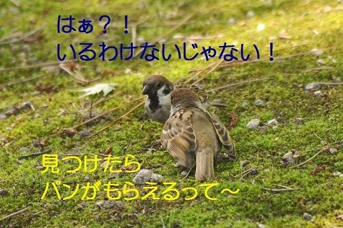 090_20170819212143cae.jpg