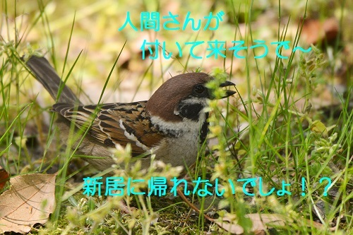 100_20170519220643e72.jpg