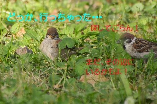 100_20170612194952baf.jpg