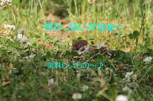 100_20170614214632fb7.jpg