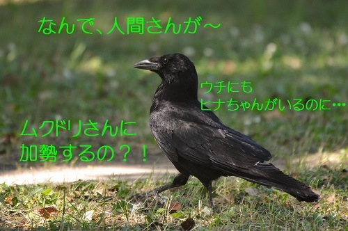 100_20170703193637a34.jpg