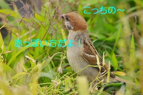 100_201707111944378e2.jpg