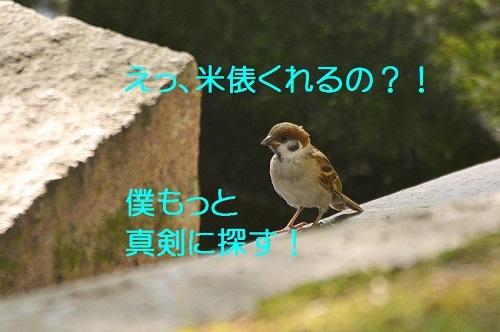 100_201708192121457d7.jpg