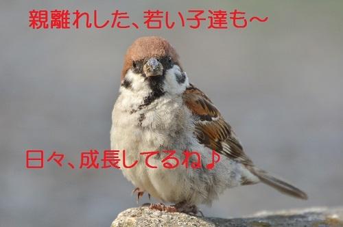 100_20170831194532468.jpg