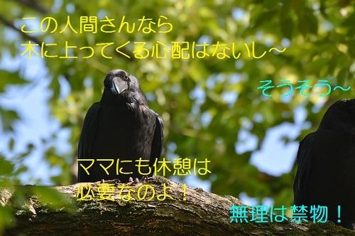 105_20170522202855570.jpg