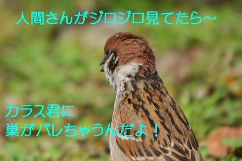 110_20170508190432785.jpg