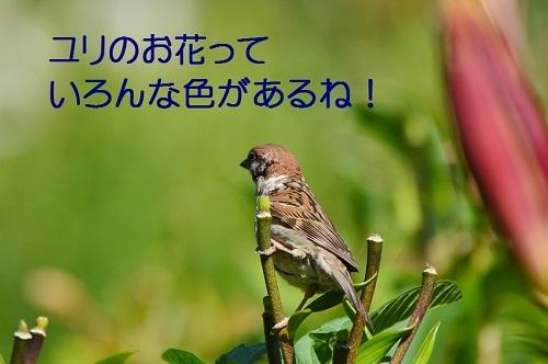 110_20170618193503324.jpg
