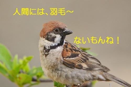 110_20170809210319a5e.jpg