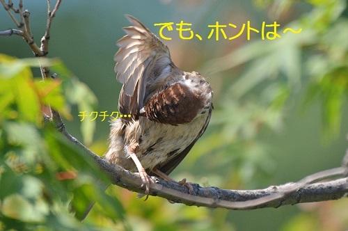 110_20170814195846ae3.jpg