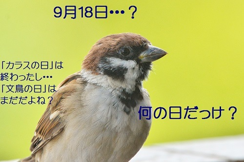 110_201709182227083ad.jpg