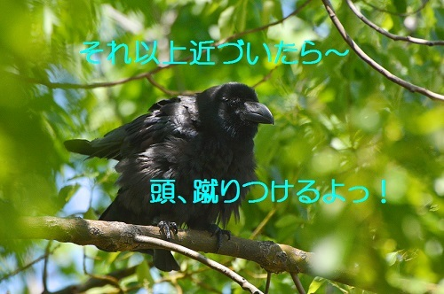 120_201706302021582c0.jpg