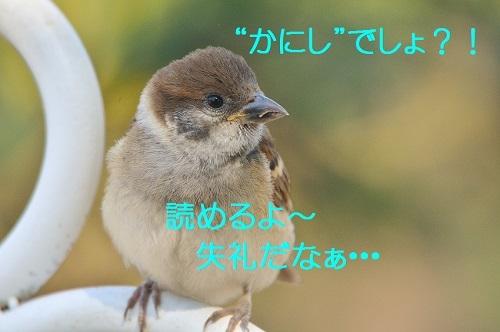 120_20170710200455bb3.jpg