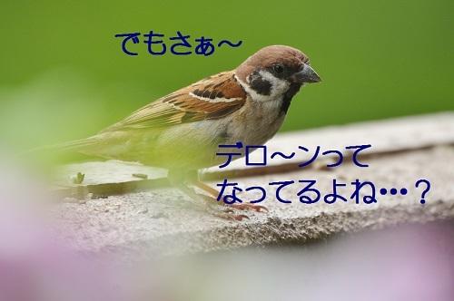 120_2017072418411333f.jpg