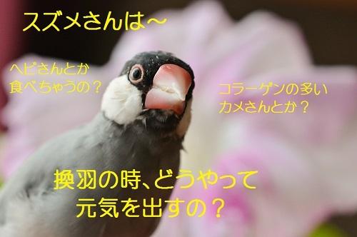 120_20170809210321d22.jpg