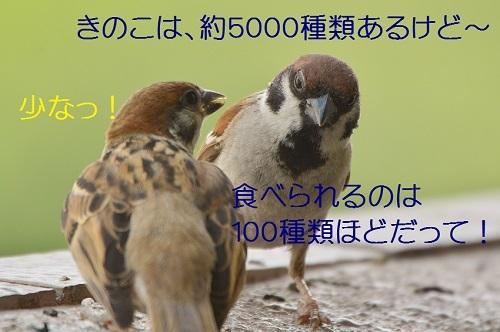 120_20170825195906f4c.jpg