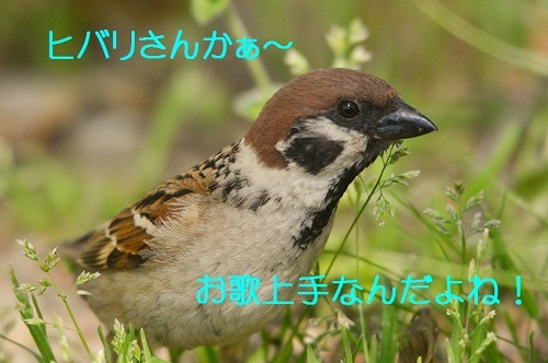 130_20170520215716fe4.jpg