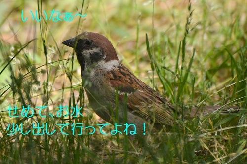 130_20170613204047fad.jpg