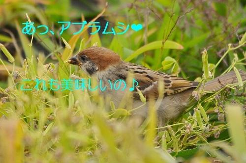 130_201707111946003ad.jpg