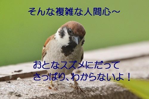 130_20170813212627e2b.jpg