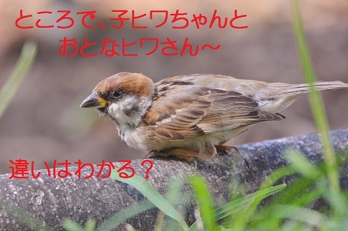 130_20170827200733422.jpg