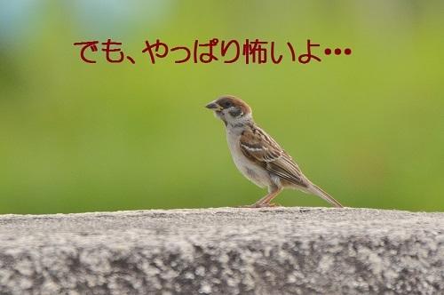 130_20170909215717af7.jpg
