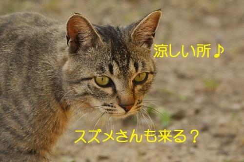 150_20170619203650128.jpg