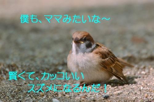 160_2017072519194500d.jpg