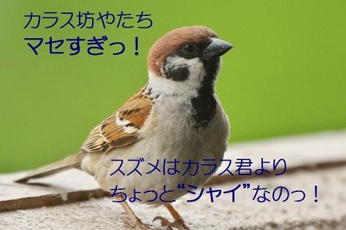 170_20170522201550f0b.jpg