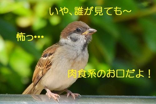 170_20170602201047f02.jpg