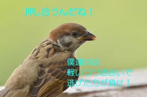 170_201708162140043a3.jpg