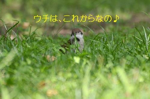 180_201707251919488d0.jpg