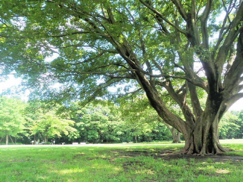 みどりの木