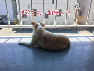 写真 2017-08-30 0 10 20