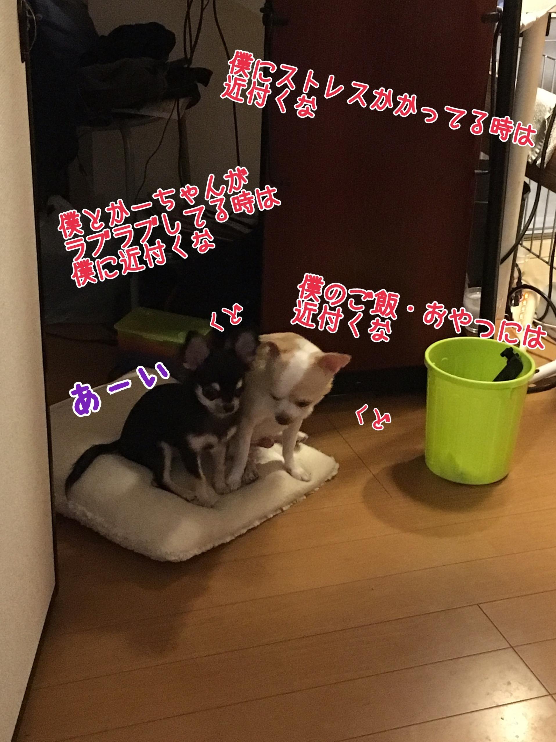 写真 2017-09-03 17 35 03