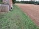 畑周りの草刈り