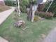 芝生の草刈り
