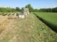 草刈りした畑