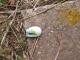 屋根から落ちた小鳥の卵