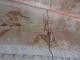 墳墓の壁画①