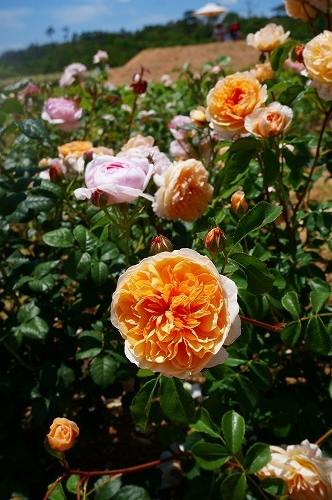 花の森 (9)
