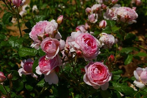 花の森 (19)