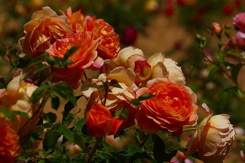 花の森 (24)