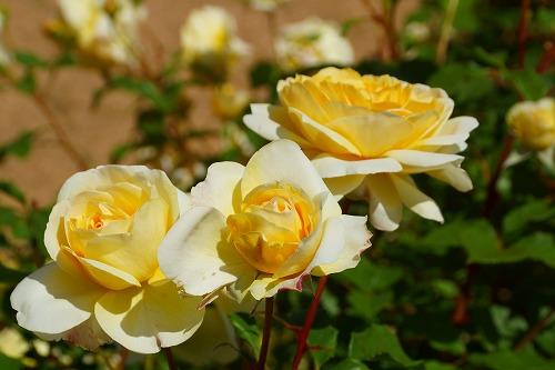 花の森 (32)