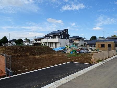 大角豆2011-353
