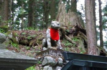 遥拝殿前のムキムキの狛犬様、ちょー目が合う