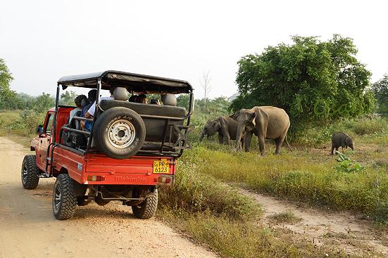 17-01-17_udawalawe-srilanka_0174.jpg