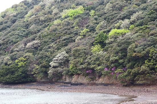 17-04-10_tsushima-nagasaki_07216.jpg