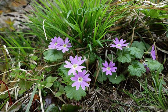 17-05-24_shibukawa-shizuoka_00301.jpg