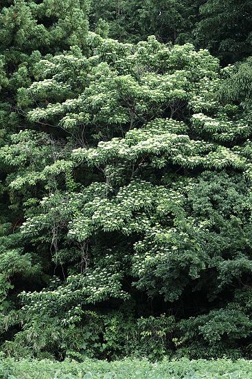 17-06-06_naruseone-kanagawa_00197.jpg
