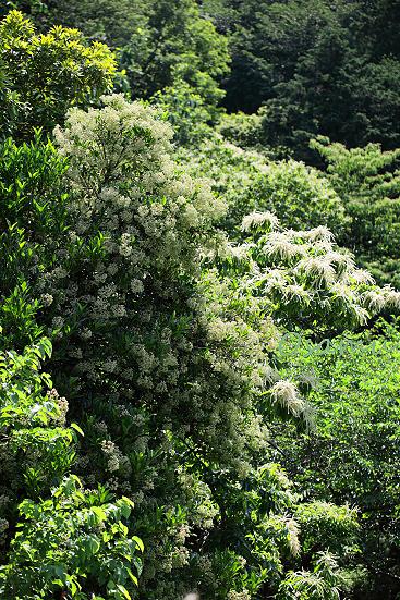 17-06-09_yakushido-tokyo_00078.jpg